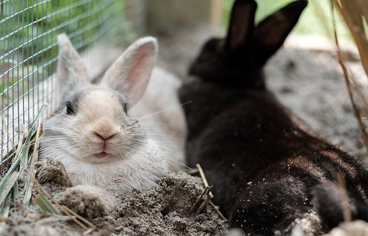 Rabbits Mandalay Farms Jupiter Fl